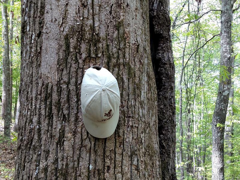 Hunting On A Budget Big Timber : Gordon : Twiggs County : Georgia
