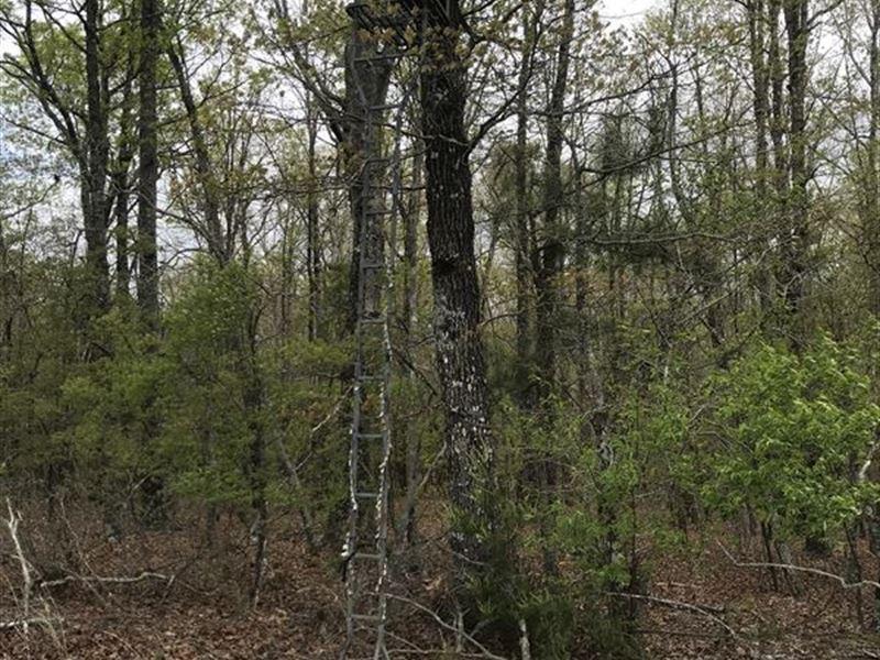 Sporting Tract Cherokee County : Ball Ground : Cherokee County : Georgia
