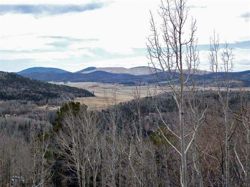 Borders National Forest : Cripple Creek : Teller County : Colorado