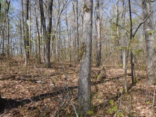 6.70 Acres Totally Wooded : Jamestown : Fentress County : Tennessee