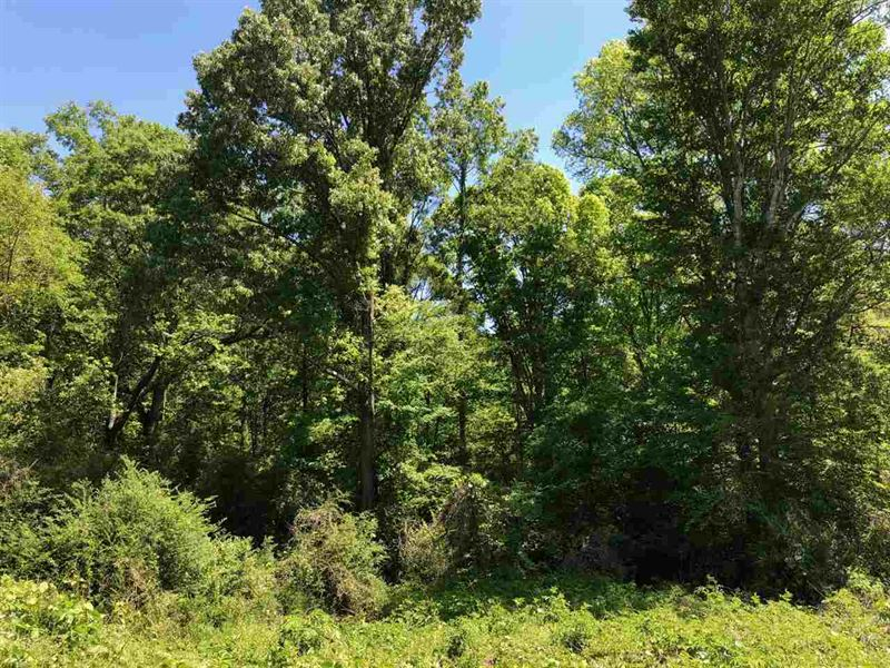 Close To Town, Yet In The Country : Forest : Scott County : Mississippi