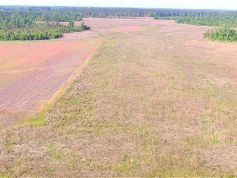 Evergreen Hunting And Farm Land : Evergreen : Columbus County : North Carolina
