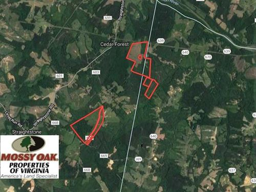 377 Acres of Hunting Land For Sale : Cedar Forest : Pittsylvania County : Virginia