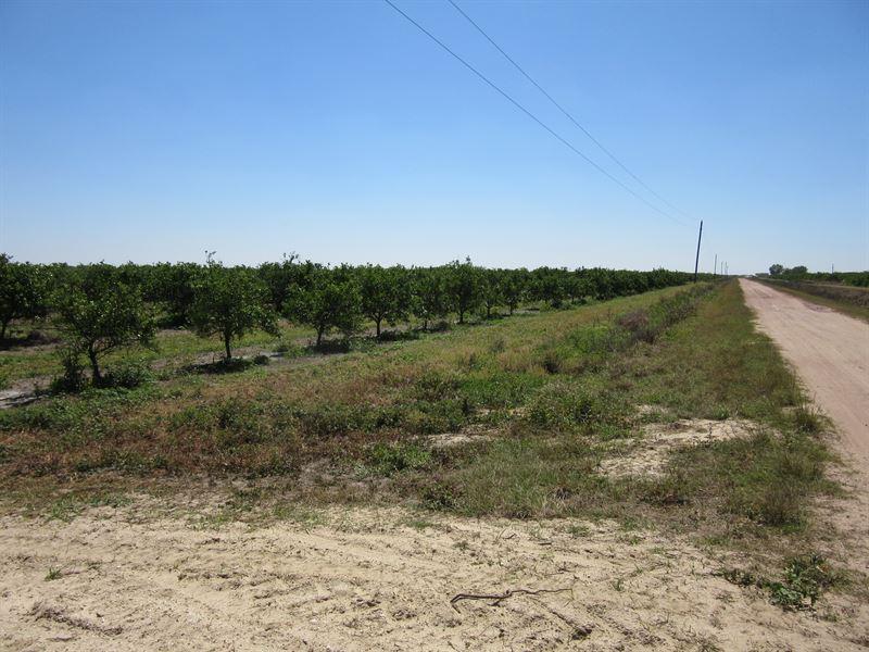Alico Island Pond Grove : Okeechobee : Osceola County : Florida