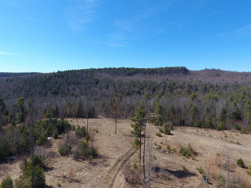 Alder Brook Forest : Horicon : Warren County : New York