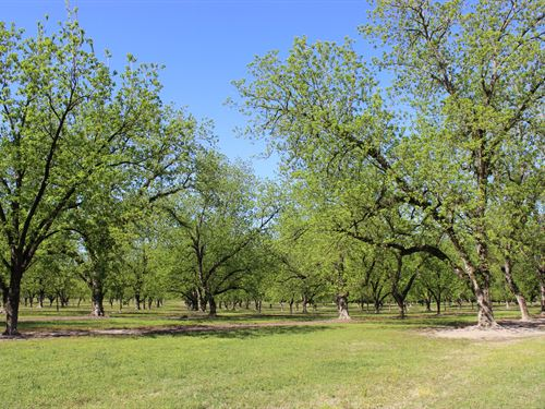 Productive Pecan Orchard & Home : Camilla : Mitchell County : Georgia