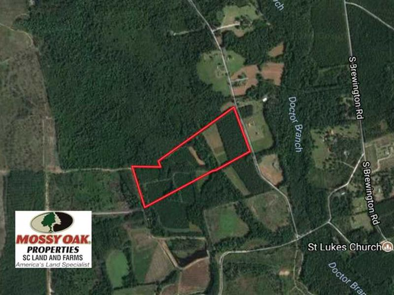 35 Acres of Hunting Land For Sale : Greeleyville : Clarendon County : South Carolina