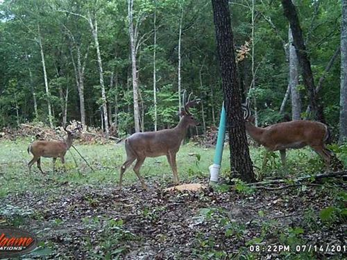 97 Acre Maries County Timber Groun : Vichy : Maries County : Missouri