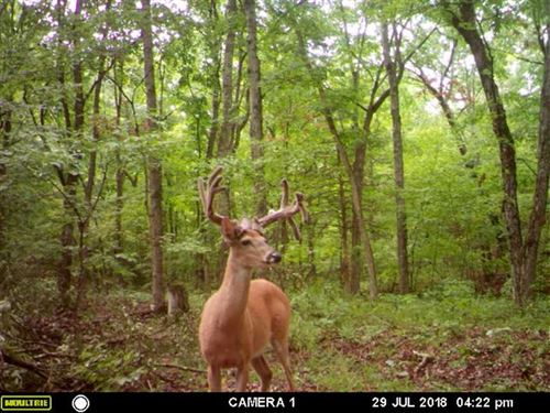 107 Acre Maries County Hunting And : Vichy : Maries County : Missouri