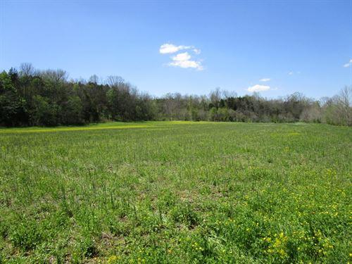 89 Acres In Metcalfe County, Ky : Edmonton : Metcalfe County : Kentucky
