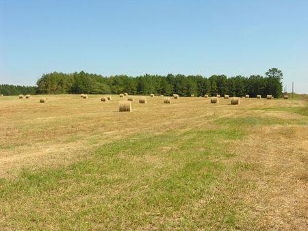 287.58+- Acre Farm : Waynesboro : Burke County : Georgia