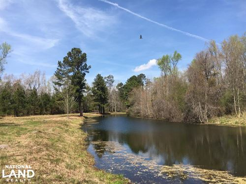 Maidendown Bay Hunting Property : Mullins : Marion County : South Carolina