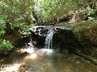 Evergreen Waterfall Farm And Timber : Evergreen : Conecuh County : Alabama