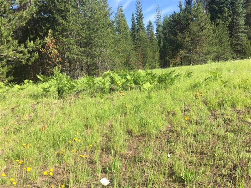 Secluded 360 : Troy : Lincoln County : Montana