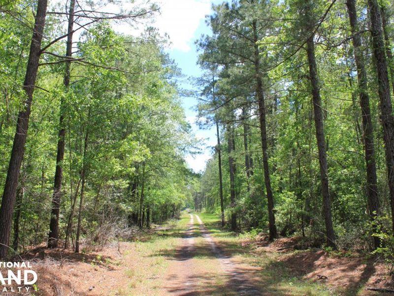 Wassamassaw Creek 115 Acres : Summerville : Berkeley County : South Carolina
