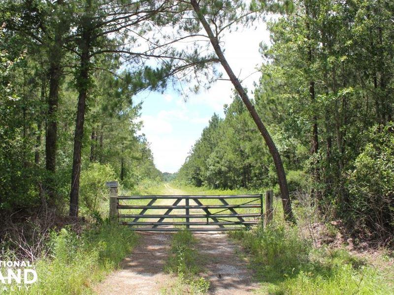 283 Acres Berkeley County : Cross : Berkeley County : South Carolina