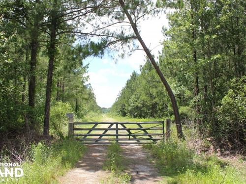 283 Acres Timber Investment : Cross : Berkeley County : South Carolina