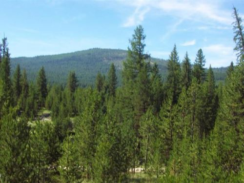Acreage With Easy Access To Hunt An : Marion : Flathead County : Montana