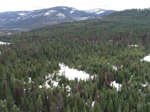 Beaver Peak Bonanza : Heron : Sanders County : Montana