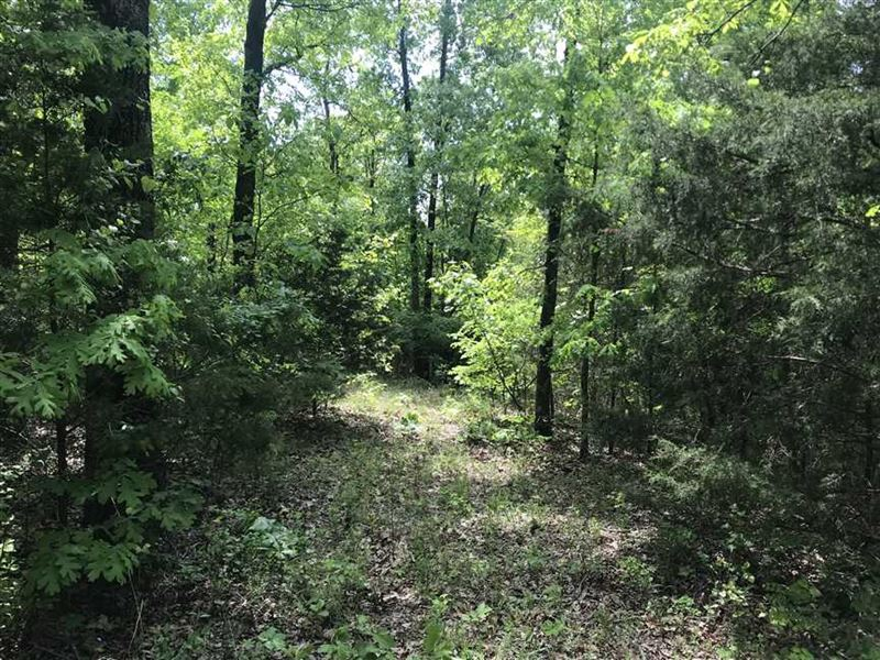 23.5 Acres of Great Hunting Near : Flippin : Marion County : Arkansas