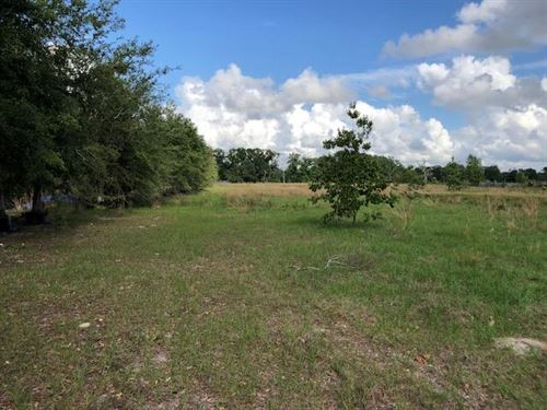 16.81 Acres 775675 : Old Town : Dixie County : Florida