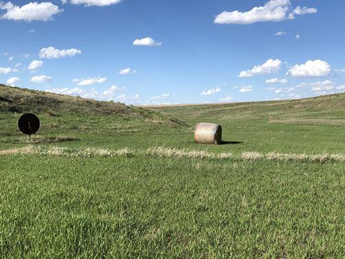 Decatur County Crop & Grass : Oberlin : Decatur County : Kansas