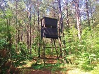 Pine Timberland For Sale Northern : McComb : Pike County : Mississippi