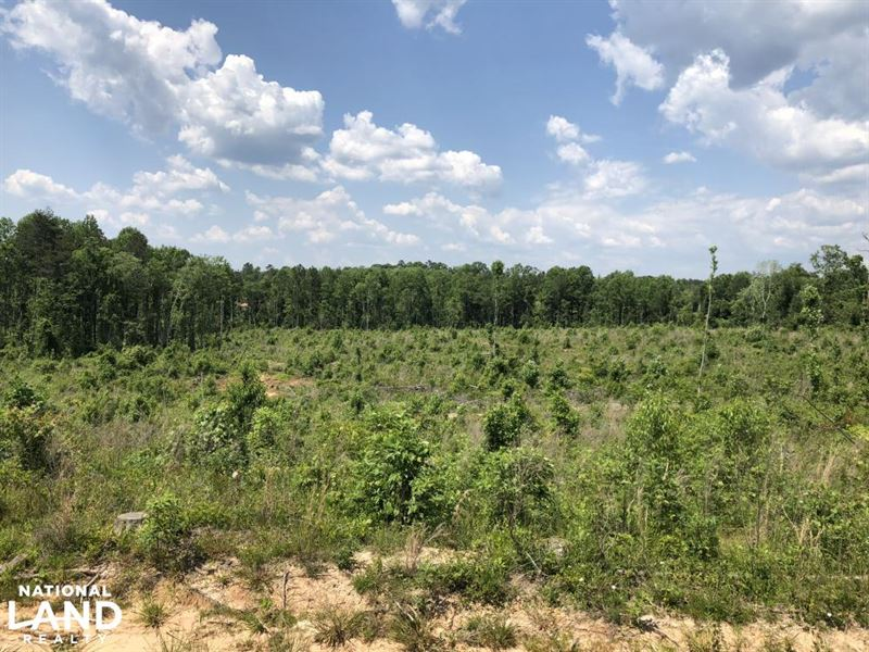 Rural Hunting Land : Polkville : Smith County : Mississippi