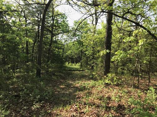 40 Acres Of Good Timber And Exc : Lincoln : Benton County : Missouri