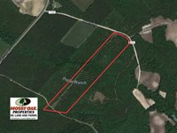 Reduced, 26.7 Acres of Hunting an : Pink Hill : Jones County : North Carolina