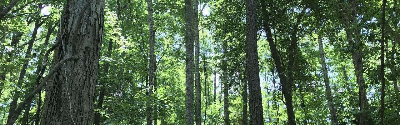 Pond Creek Tract : Luverne : Crenshaw County : Alabama