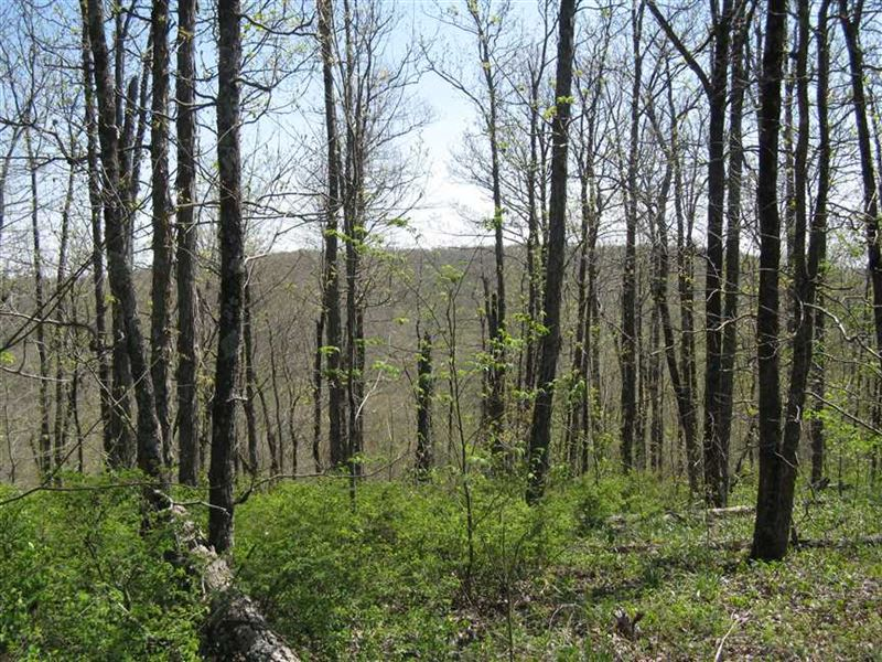 Price Reduced, Beautiful Ozark : Combs : Madison County : Arkansas