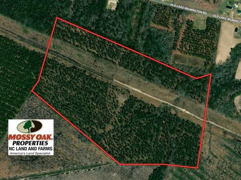 63 Acres of Timber Land For Sale : Riegelwood : Columbus County : North Carolina