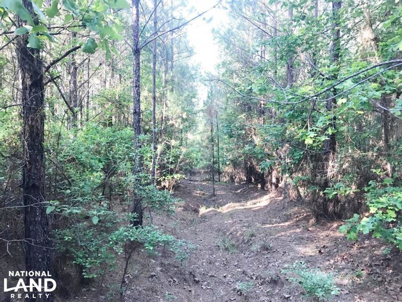Blakely Creek Hunting And Timber In : Fayette : Fayette County : Alabama