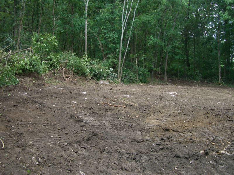 61 Wooded Acres In Scottsboro : Scottsboro : Jackson County : Alabama