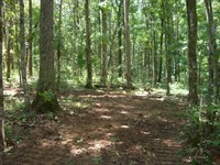 61 Wooded Acres In Scottsboro : Scottsboro : Jackson County : Alabama