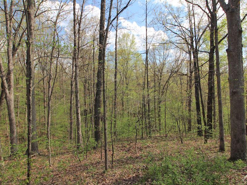 Robins Rd - 23 Acres : Senecaville : Guernsey County : Ohio