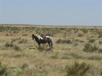 100 Acres, Perfect Ranch, $498/Mo : Sierra Blanca : Hudspeth County : Texas