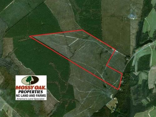 Reduced, 219 Acres of Timber Land : Scotland Neck : Halifax County : North Carolina