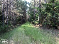 Leake County Timber Investment : Pleasant Grove : Leake County : Mississippi