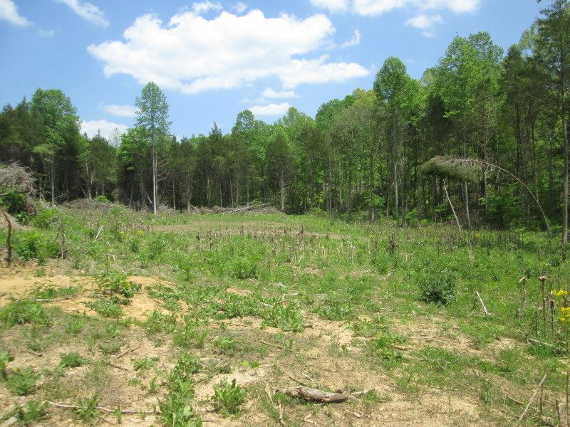 130 Acres In Hart County, Ky : Magnolia : Hart County : Kentucky