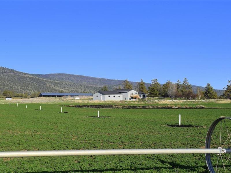 Ideal Family Farm : Malin : Klamath County : Oregon