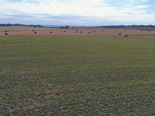 Custer County Dryland And Crp : Arnold : Custer County : Nebraska