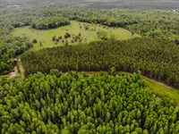 Great Pasture And Timber Investment : Perry : Taylor County : Florida
