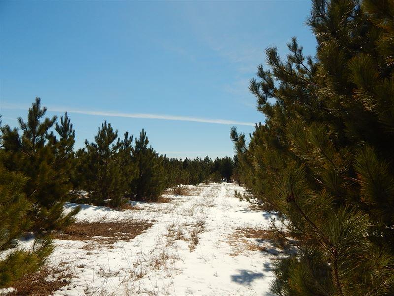 Great Slice Of Wildlife Woods : Levering : Emmet County : Michigan