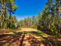 116 Acres Near Lake Succession : Abbeville : Abbeville County : South Carolina