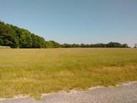 Beautiful Farm Land : Midland City : Dale County : Alabama