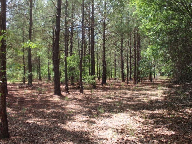 Bowhunter's Paradise & Timberla : Abbeville : Wilcox County : Georgia