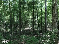 Pelahatchie Timber And Hunting Trac : Pelahatchie : Rankin County : Mississippi