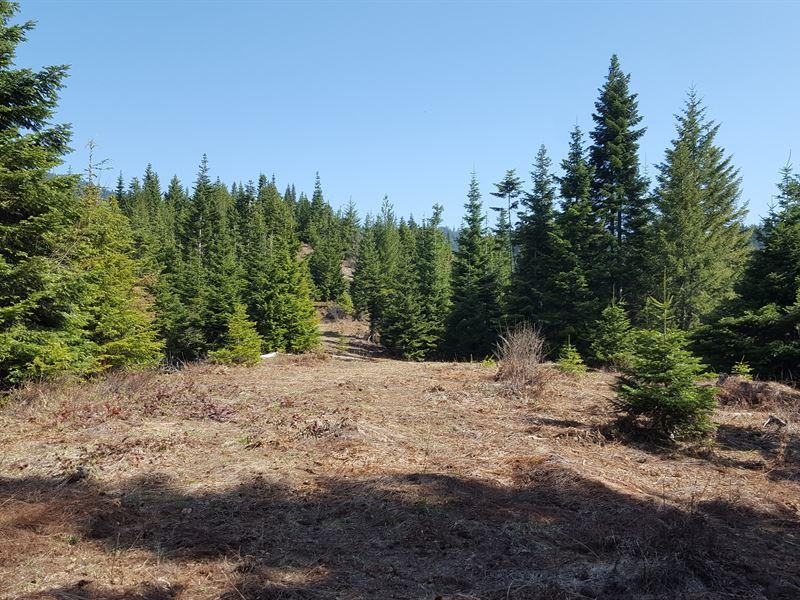 Cougar Mountain 40 : Kingston : Shoshone County : Idaho